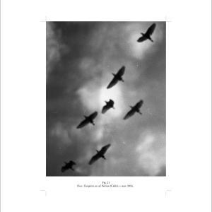 Fig. 21. Desc. Européens en vol. Bornos (Cádiz), c. mar. 2016, 2020. Impresión de pigmentos minerales sobre papel de algodón Canson. 40 x 30 cm. Edición 5 + 2 PA. JJ-0062