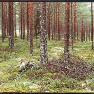 TREES, 2007 - 2016. C-Print. 85 x 160 cm. Edición de 5